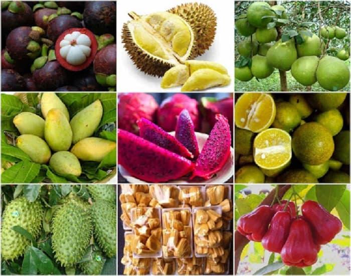 Tiêu chuẩn xuất khẩu nông sản qua Trung Quốc chi tiết nhất