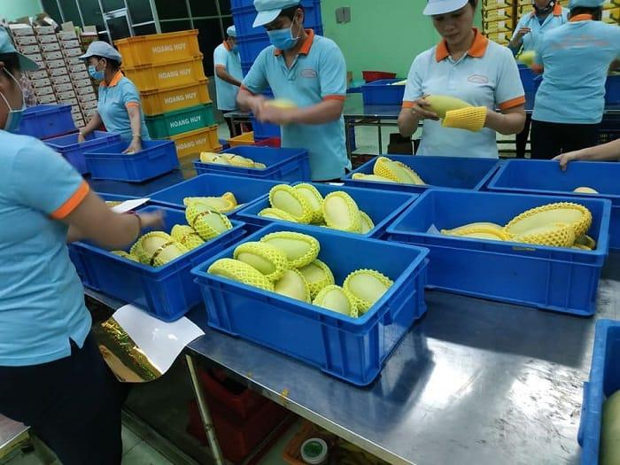 Tiêu chuẩn xuất khẩu xoài từ Việt Nam sang các nước hiện nay