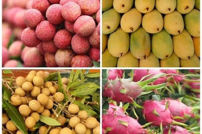 Tìm hiểu 8 loại trái cây được xuất khẩu sang Trung Quốc hiện nay