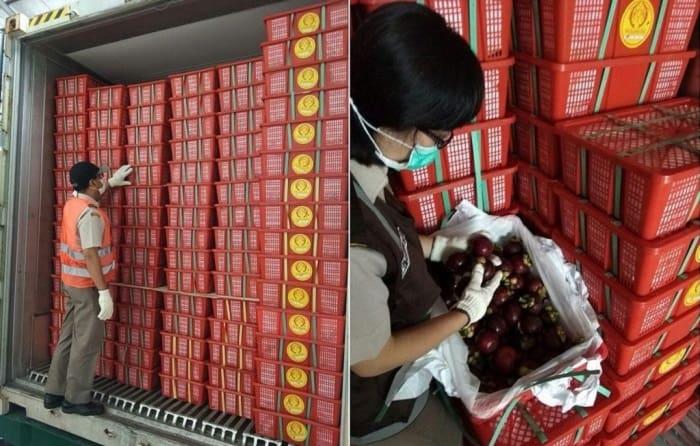 Tiêu chuẩn xuất khẩu của măng cụt đi các thị trường các nước hiện nay