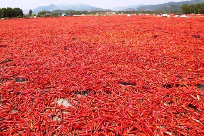 Tiêu chuẩn xuất khẩu ớt sang Trung Quốc như thế nào?